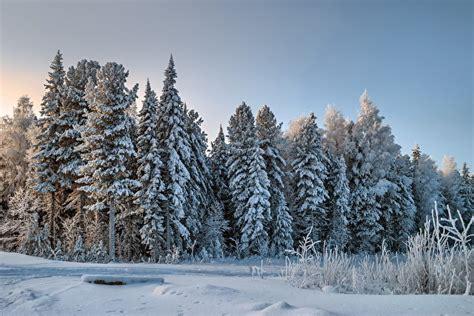 imagenes para fondo de pantalla invierno fondos de pantalla bosques invierno nieve naturaleza