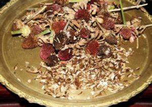 Pupuk Untuk Tanaman Bunga Kertas 7 cara menanam bunga kertas bougenville dalam pot