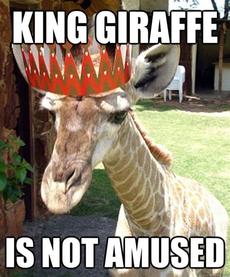 19 very funny giraffe images
