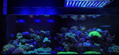 led reef aquarium lighting aquarium led lighting photos best reef aquarium led