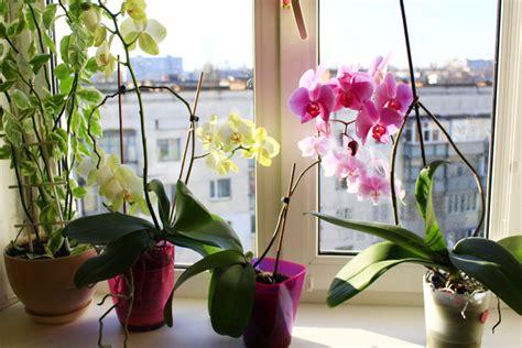 orchideen im schlafzimmer orchideen im schlafzimmer ungesund brocoli co