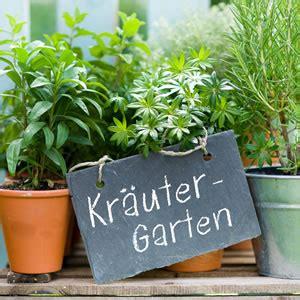 Gartenkräuter Pflanzen by Kr 228 Uter Und Gartenkr 228 Uter Pflanzen Welche Passen Zusammen