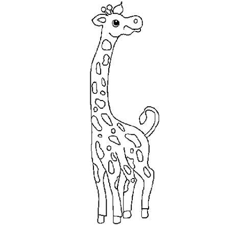 imagenes de jirafas en ingles dibujo de jirafa para colorear dibujos net