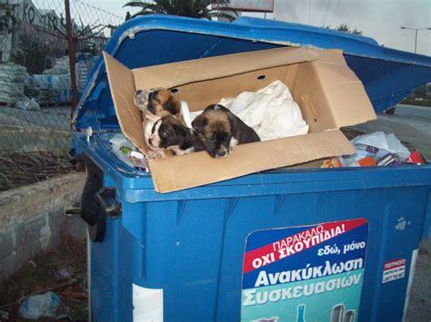 backyard breeders aspca τι σημαίνει backyard breeder all about dog