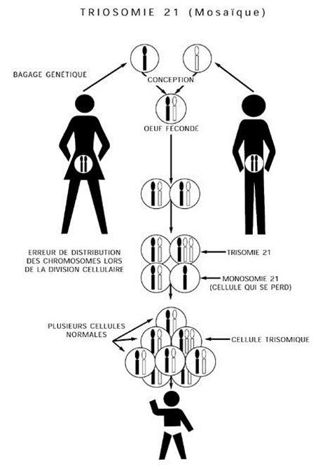 A Les Origines G 233 N 233 Tiques