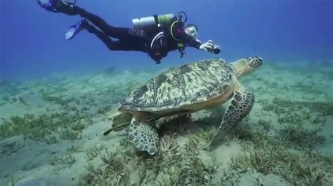 camel dive sea corals diving camel dive club sharm el sheikh