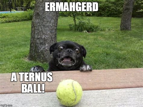 pug tennis pug tennis imgflip