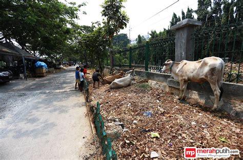 Tempat Beli Pakan Ternak Jakarta musim kemarau harga pakan hewan kurban naik 100 persen