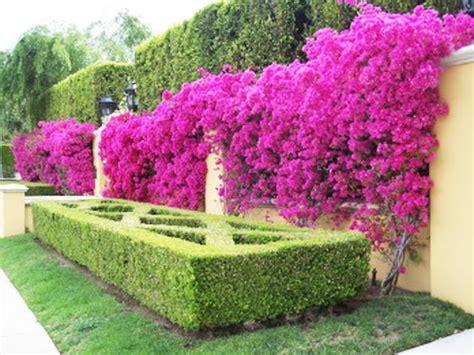 bunga kebun bunga yang indah news
