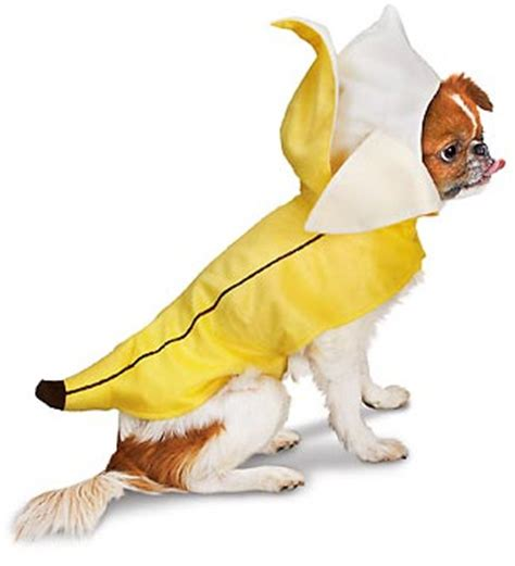 are bananas bad for dogs costumes