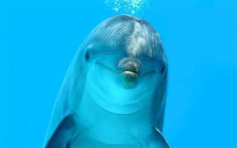 dolphin talk how we can talk with dolphins in 5 easy steps age books dolphin echolocation dolphin facts and information