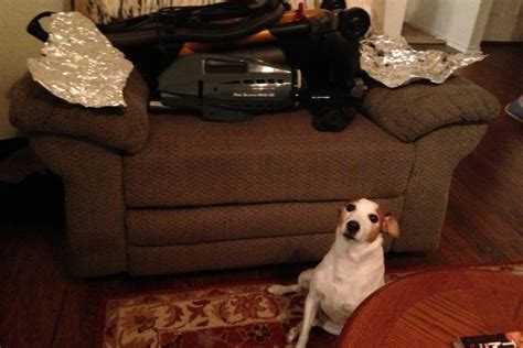 dog off couch aluminum foil and bubble wrap can keep a dog off the furniture