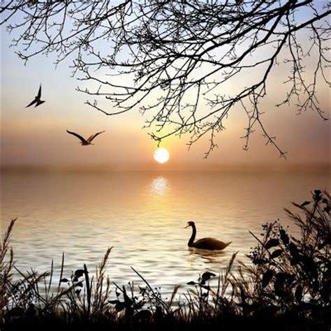 imagenes bonitas de paisajes y animales recopilaci 243 n de im 225 genes y fotos bonitas con paisajes