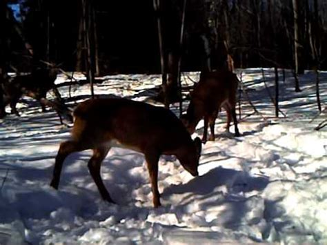 spypoint ir 5 trail camera video youtube