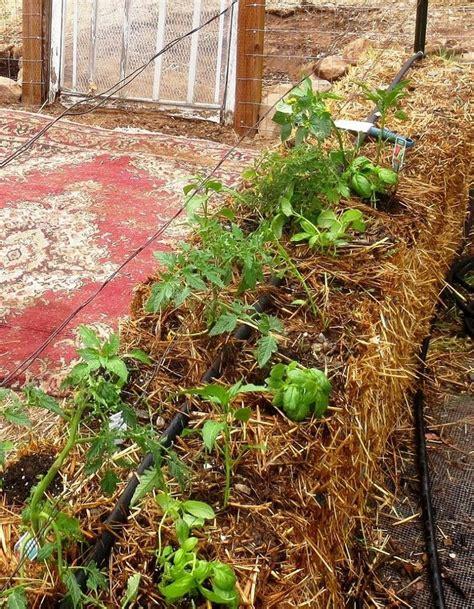 Straw Garden by Growing A Straw Bale Garden