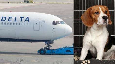 cani in cabina aereo novit 224 per le compagnie aeree ora gli animali domestici