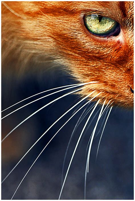 Cat Eye Rafflesia Orange 228 best images about rust color burnt orange on