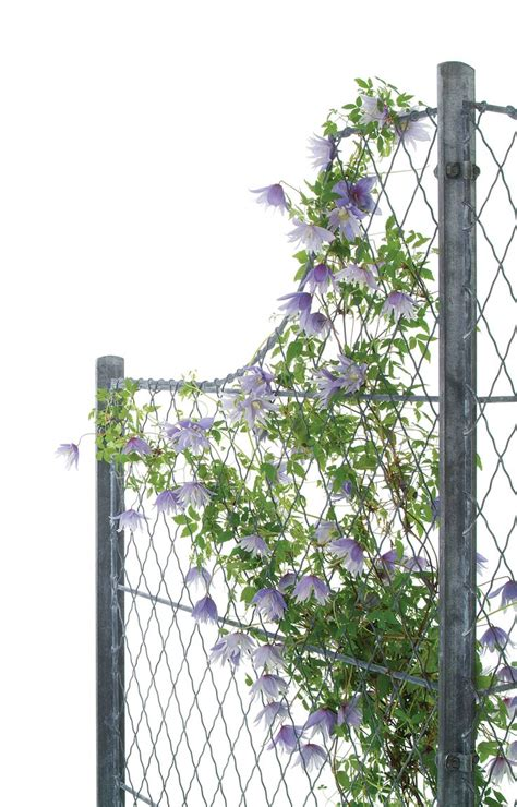 Curved Fence Top Trellis The 33 Best Images About Garden Trellis Lattice Fencing On Gardens Plants And Bespoke