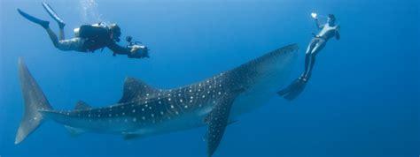 dive holidays maldives diving holidays holidays maldives diving