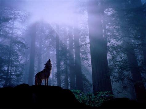 escritorio al reves los mejores fondos de pantalla de lobos taringa