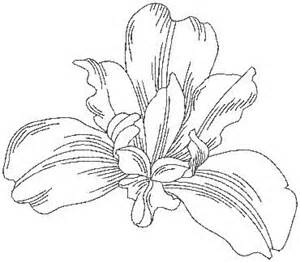Iris Outline by 33 Best Images About Liam S Ideas On Iris Flower And In Nature