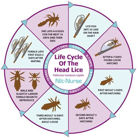lice treatment cycle lice treatment world