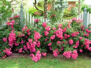 easy landscaping ideas with carpet roses your easy garden