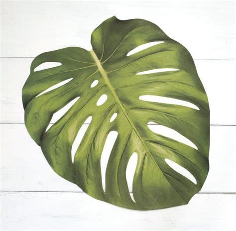 Monstera Leaf Paper Placemats ? Hester & Cook