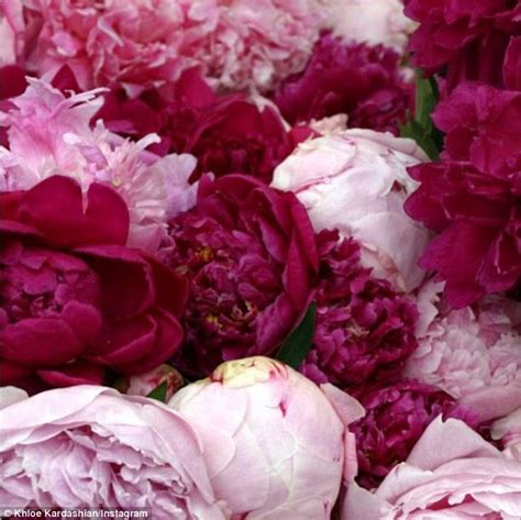 pink peonies instagram khloe kardashian and french montana return to la from