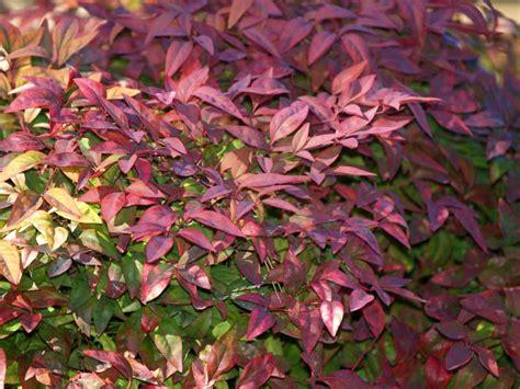 best flowering shrubs for partial sun plants for east east gardening
