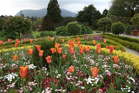 File Flower Garden At Muckross House Jpg Wikipedia House With Flower Garden