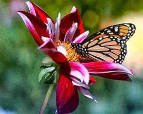 plants to attract butterflies to your backyard