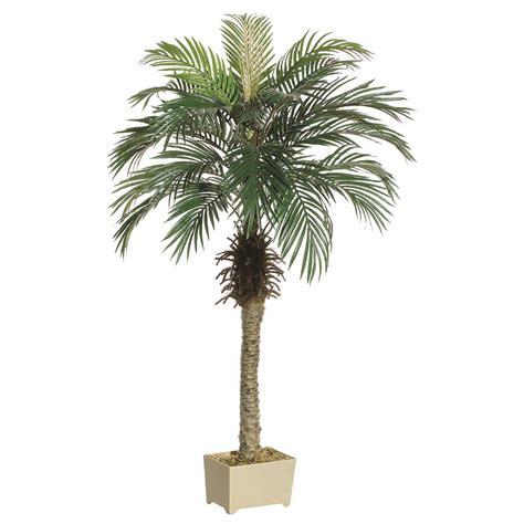 Amazing Christmas Tree Palms #2: ALL1395-ZM-1.jpg