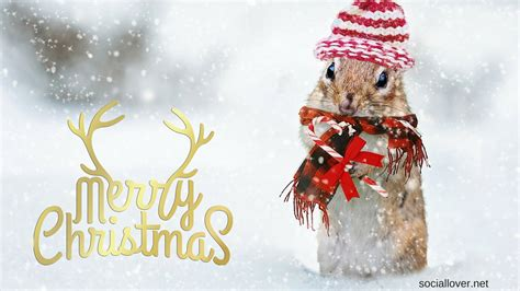 merry christmas images hd wallpapers  whatsapp