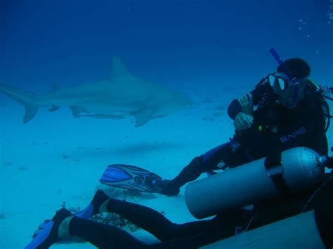 dive shark diving with bull sharks in playa dressel divers