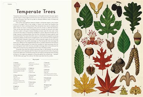 libro botanicum activity book welcome botanicum il nuovo libro di katie scott 232 dedicato alle piante frizzifrizzi