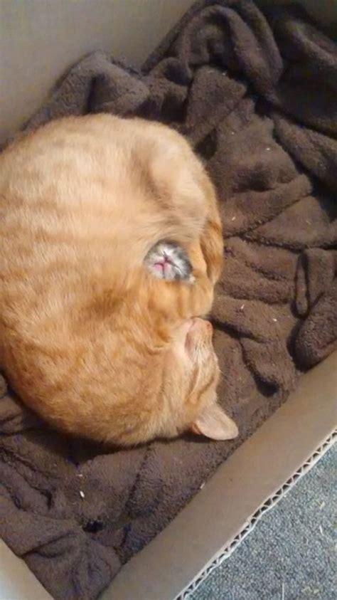 cute  funny cat   brighten   entire day