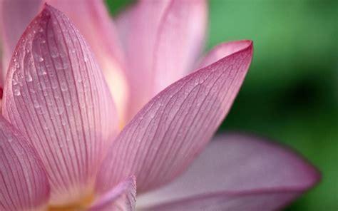 hd flower pink 1080p hd wallpaper free 15426
