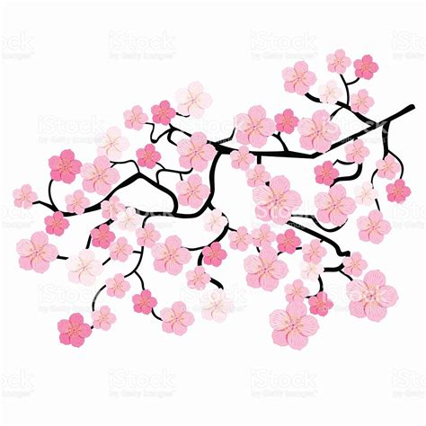 Japanese Wedding Clip by Blossom Clipart Japanese Cherry Blossom Pencil And In