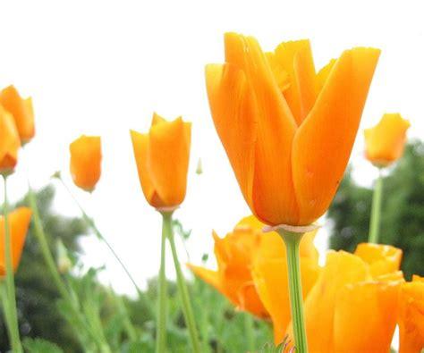 fiori dei ci tipi di fiori fiori di piante