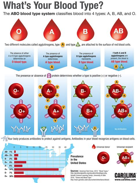 Infographic What S Your Blood Type Carolina Com Blood Type Pictures