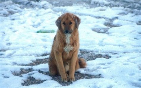 puppy cold is it cold to leave your outside top tips