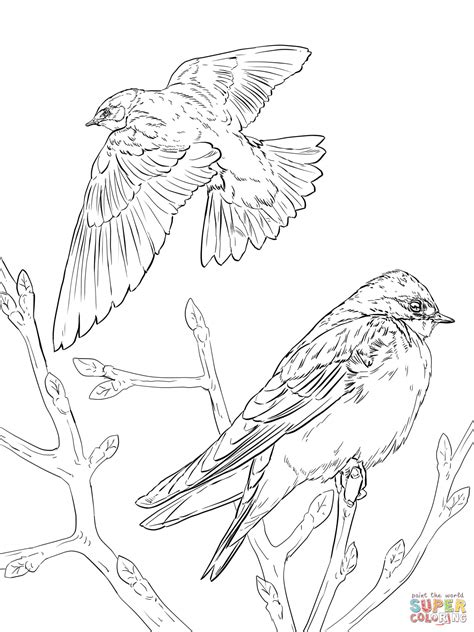 realistic tree swallows coloring page free printable