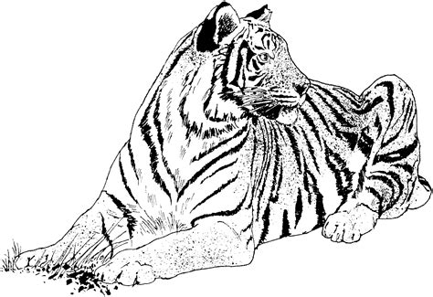 White Tiger Coloring Pages free printable tiger coloring pages for