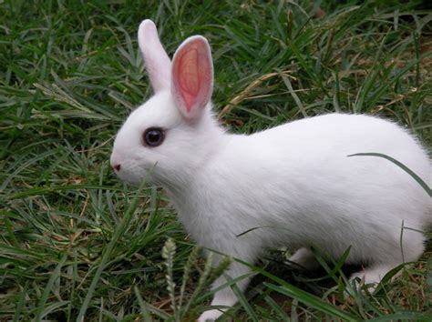 rabbit images rabbit hd beautiful wallpapers picture free for