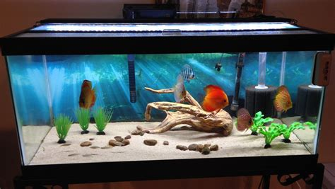 aquarium for home decoration custom bullnosed acrylic aquarium offers diners oceanside