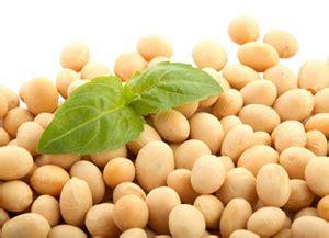 ferro alimenti vegetariani ferro quali sono gli alimenti vegetali pi 249 ricchi di