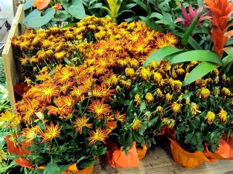comprare fiori comprare piante comprare piante fiorista comprare