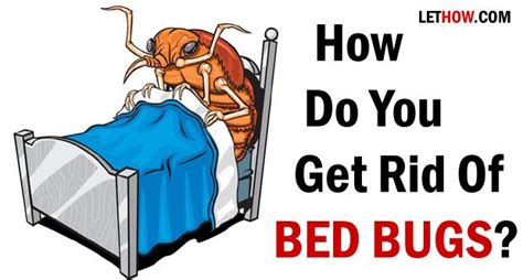 bed bugs treatment images  pinterest bed bugs treatment pest control   beds