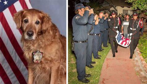 do golden retrievers make guard dogs do golden retrievers make guard dogs see what real golden retriever owners say